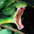 927_green_snake_on_tree_89