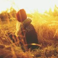 golden-plants-nature-girl-hat-scarf-sun-hd-wallpaper